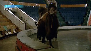 Челябинский цирк закрыли на полтора года