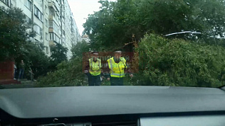 На Комсомольском проспекте непогода повалила дерево