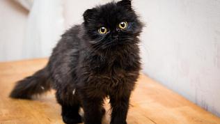 Жители Челябинска остановили движение в центре города, чтобы спасти котенка