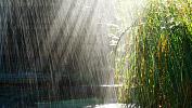 Дождливая и жарка погода сохранится в Челябинской области до конца рабочей недели