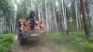 В южноуральских лесах завелись «термиты»