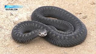 Змею заметили возле детского лагеря