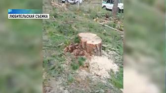 В Миассе незаконно вырубают лес