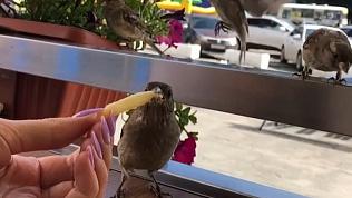 Как фастфуд влияет на здоровье птиц?