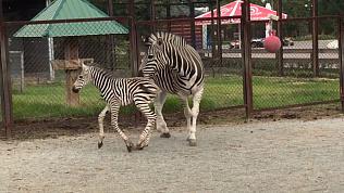 В челябинском зоопарке снова пополнение
