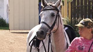 Конному клубу в Копейске подарили райд-пони