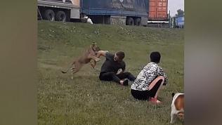Маленький львенок играет на траве в Челябинске