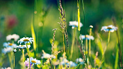 Сезон сбора трав открыт вЧелябинской области