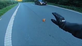 Котенок едва не угодил под колеса, если бы не заботливые водители