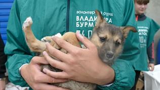 Щенков, оставшихся под завалами дома в Челябинске, искали несколько дней