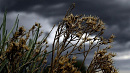 В Челябинскую область пришел сильный ветер