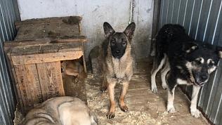 Внутреннее расследование ждет «Центр отлова животных» в Челябинске после скандала из-за трупов собак
