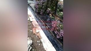 Цветочные клумбы утопают в мазуте в Курчатовском районе Челябинска
