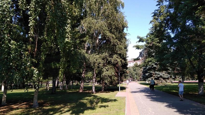 Челябинские чиновники не знают, сколько в городе деревьев, кустарников и газонов