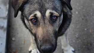 «Пропала собака»: жители одного из дворов в Челябинске потеряли всеобщего любимца