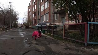 В Троицке гостит собака породы Ксолоитцкуинтли