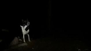 Собака всю ночь охраняла тело хозяина