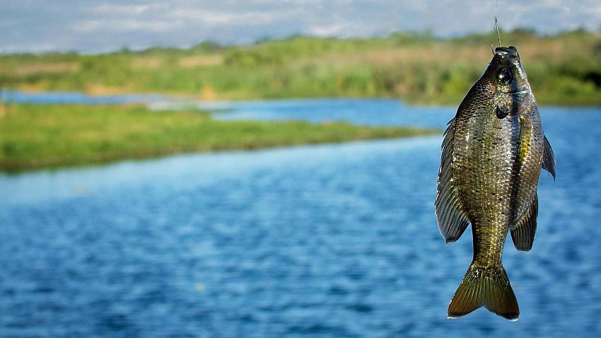 Рыболовные снасти — виды и отличия