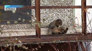 Жители воюют с ТСЖ за бездомных котов