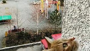Выступление флейтиста растрогало кошку