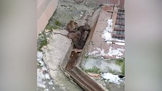 Крысы оккупировали центр Челябинска!
