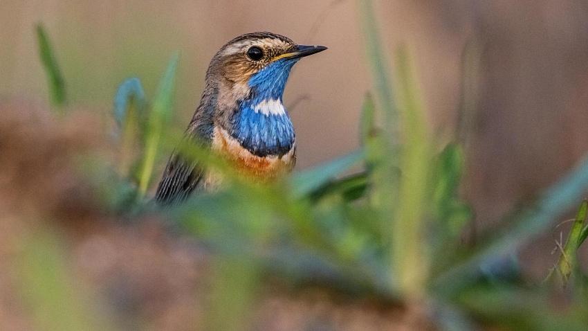 Птицы Челябинской области: фото и описание