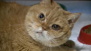 Жительница Миасса спасла кошку из рук убийцы