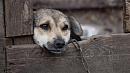 Три удара ножом: южноуралец до смерти забил собаку на глазах у детей