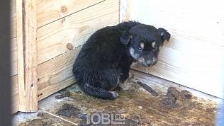 Зоозащитники Златоуста вынесли с закрытой территории больше дюжины истощенных собак