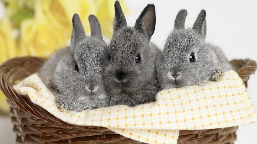 Домашний кролик: что нужно знать перед появлением нового члена семьи