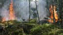 На страже леса: противопожарная система видеомониторинга заработает в 2020 году