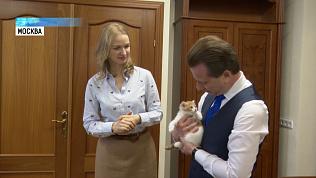 Челябинскому котенку разрешили «пройти» в Госдуму
