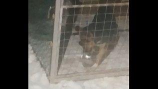 «Жонглирующий» тарелками пес повеселил южноуральцев