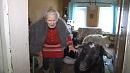 Покинутая родными пенсионерка Златоуста живет с козами