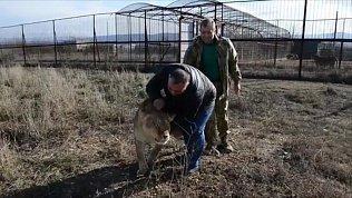Львица Лола тепло встретила Карена Даллакяна в крымском парке «Тайган»