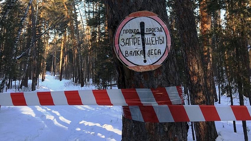 Вырубку в городскому бору Челябинска завершат 20 декабря