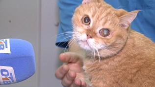 Избитая кошка из Миасса: счастливое продолжение страшной истории
