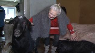 Козы стали семьёй для одинокой пенсионерки в Златоусте