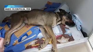 Жительница Сургута нашла собаку в Челябинске