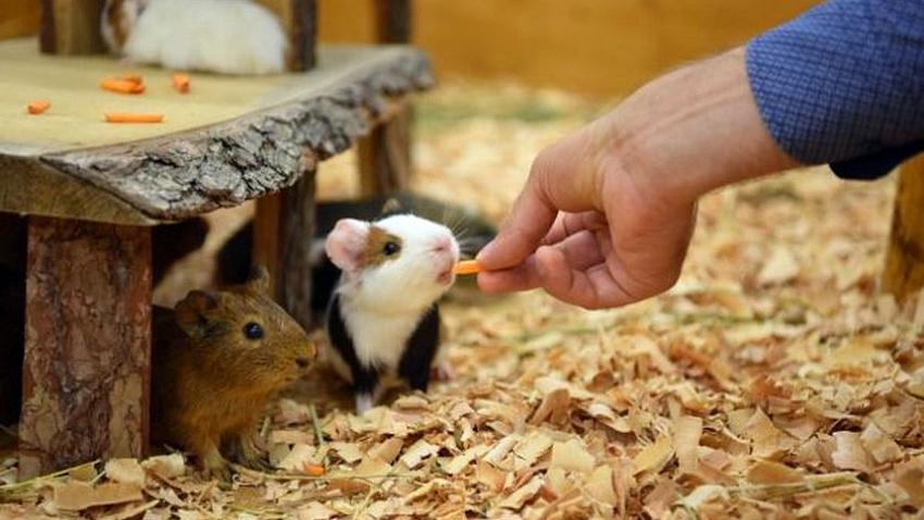 Контактные зоопарки в челябинских торгово-развлекательных комплексах окажутся под запретом