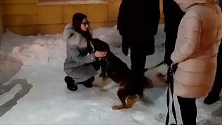 Трогательная встреча: собака Боня через 7 месяцев вернулась к хозяйке