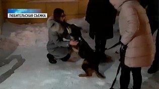 Жительница Сургута нашла свою собаку в Челябинске