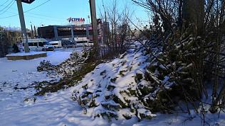 Челябинцы продолжают жаловаться на стихийные «кладбища елок» по всему городу