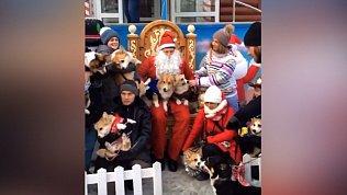 Собачки породы вельш-корги вышли на демонстрацию в Челябинске