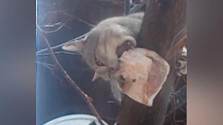 В Миассе кот съел сало из кормушки для синичек