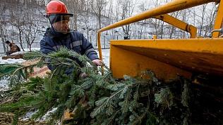 Где в Челябинске можно сдать новогодние ёлки?