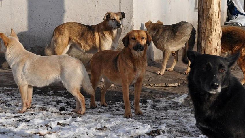 Городские улицы заполонили бездомные собаки