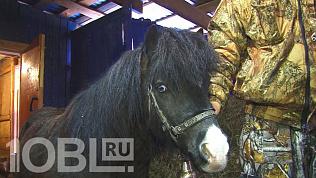 В Усть-Катаве дедушка купил внукам собственного пони