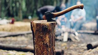 Житель Чебаркульского района увлекся вырубкой леса и захватил лишние 500 деревьев