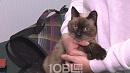 Неделю на морозе: в Миассе кота спасли от гибели